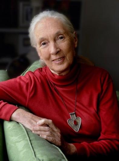 Golden Inspiration Jane Goodall