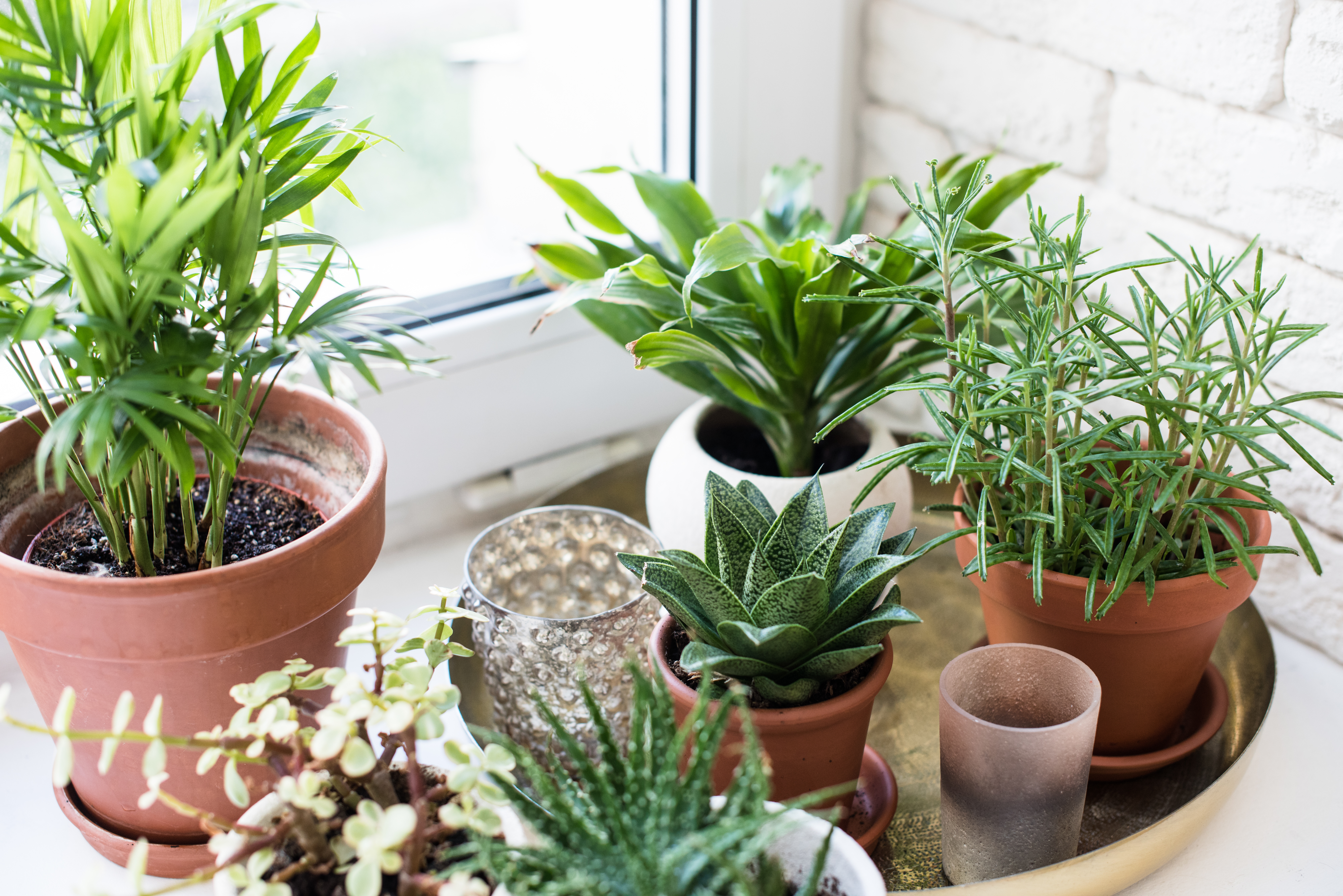 5 Indoor Gardening Tips for Seniors